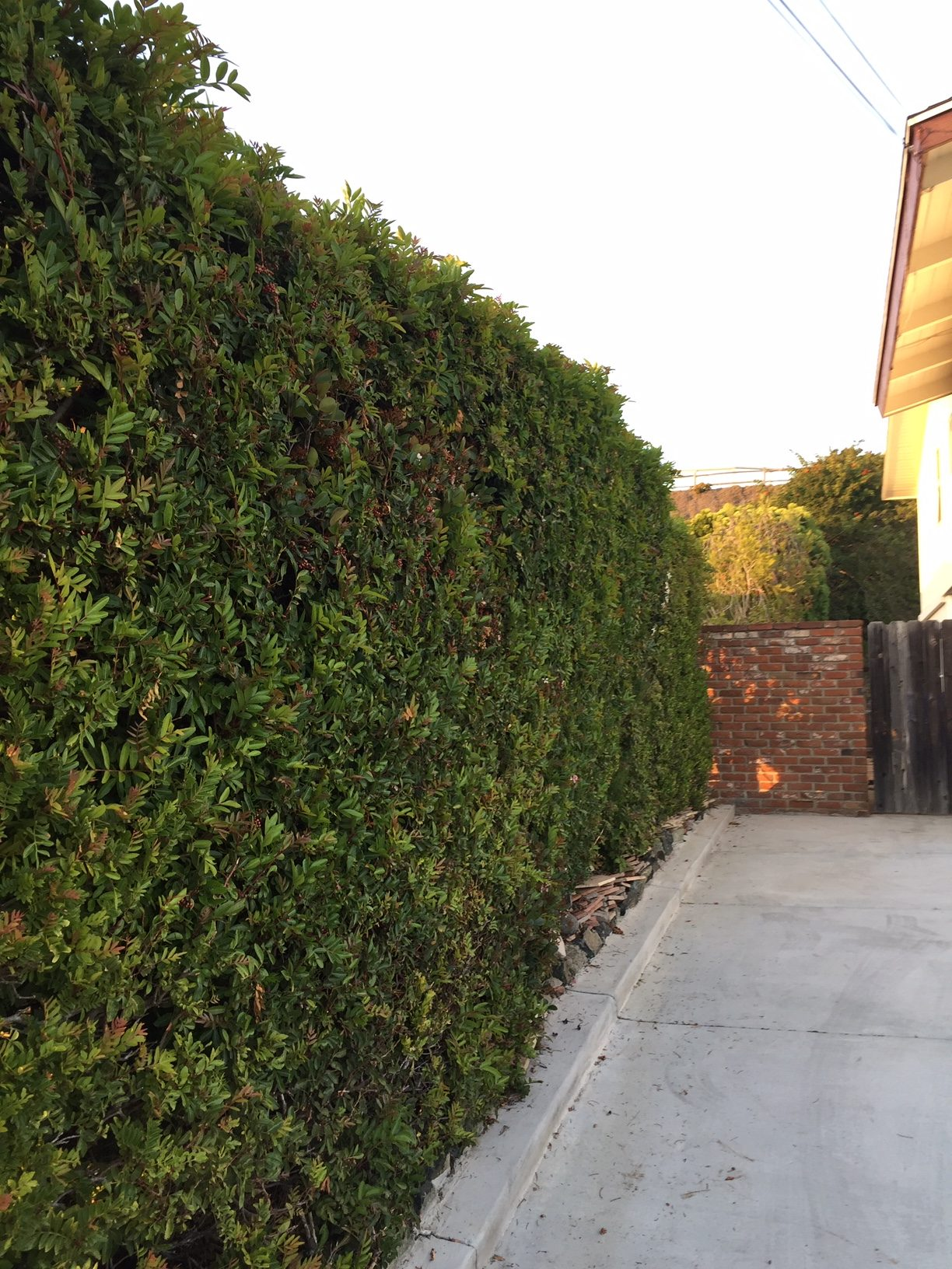 Residentail Tree Service Chula Vista