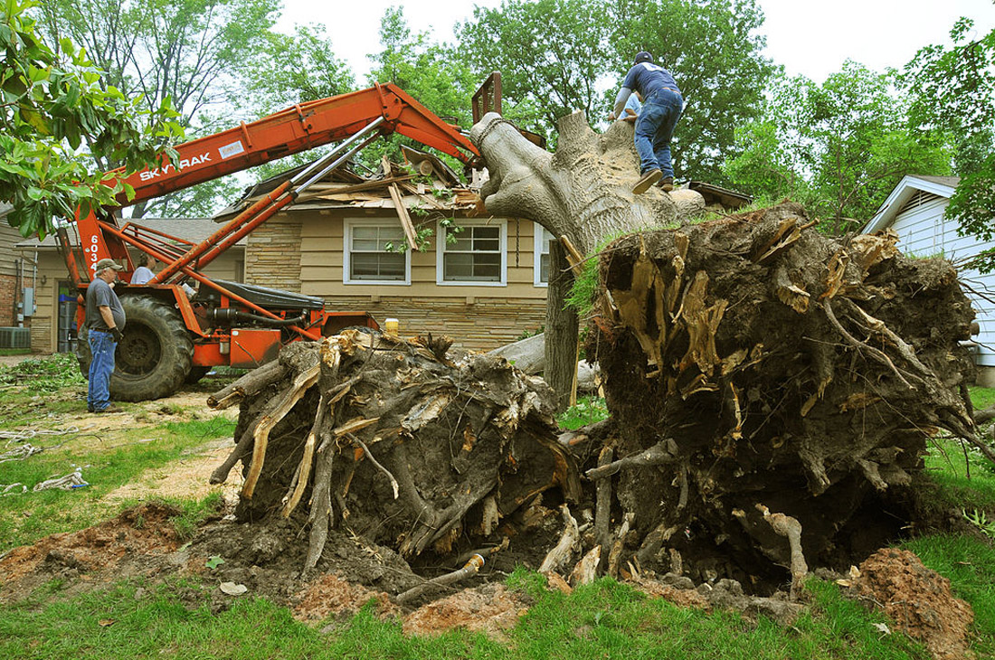 Stump Removal San Diego