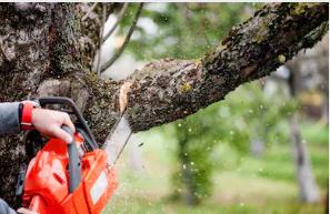 Tree Trimming Poway