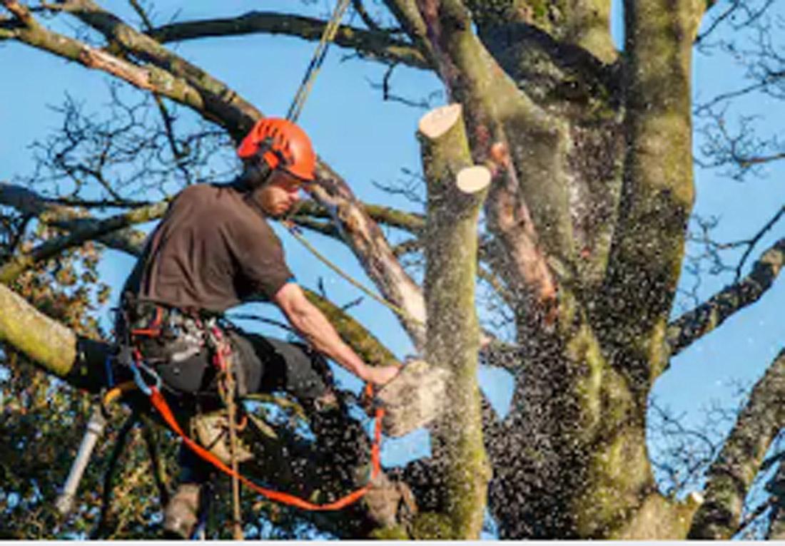 Emergency Tree Service San Diego