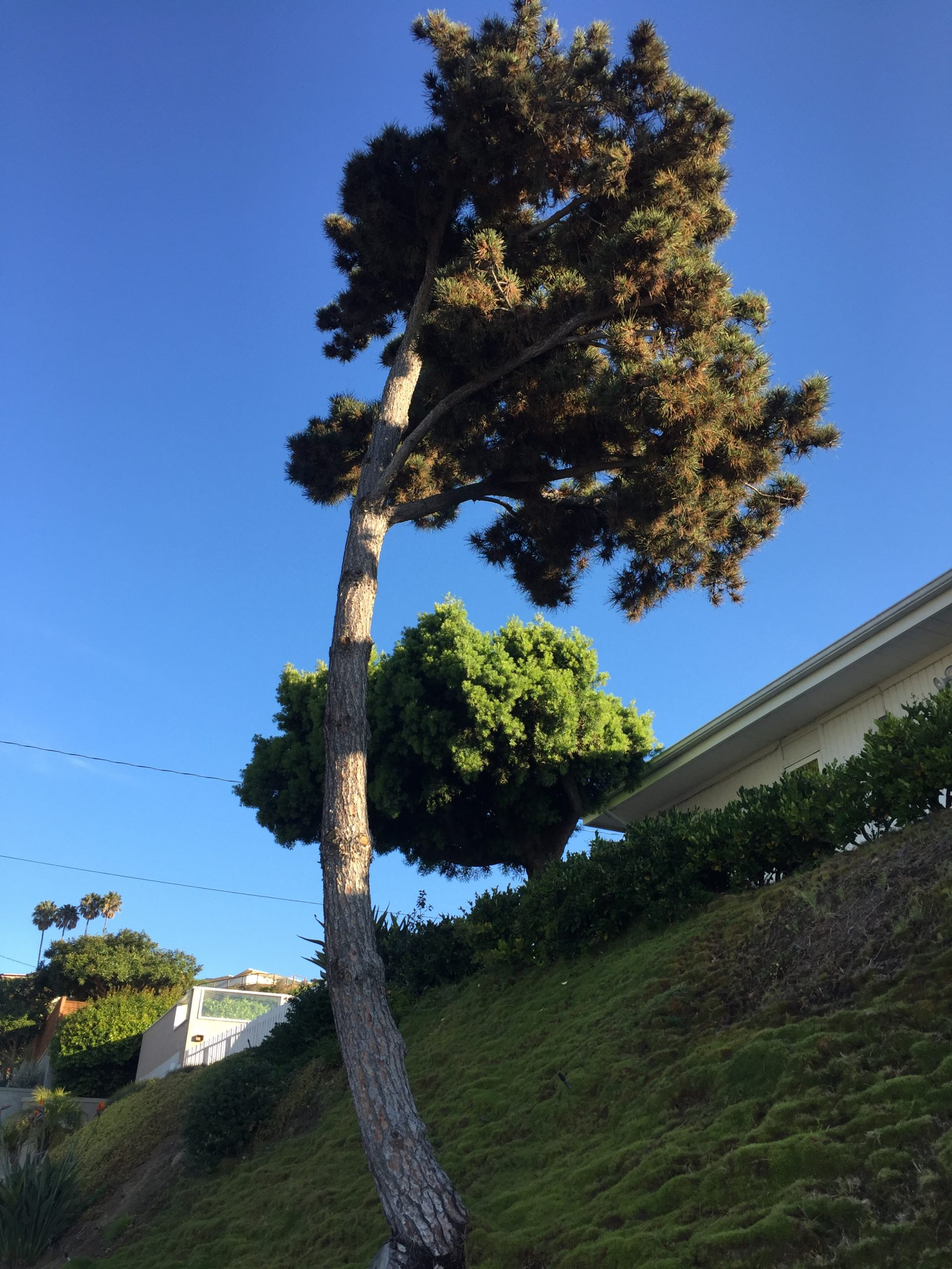 Tree Trimming San Diego