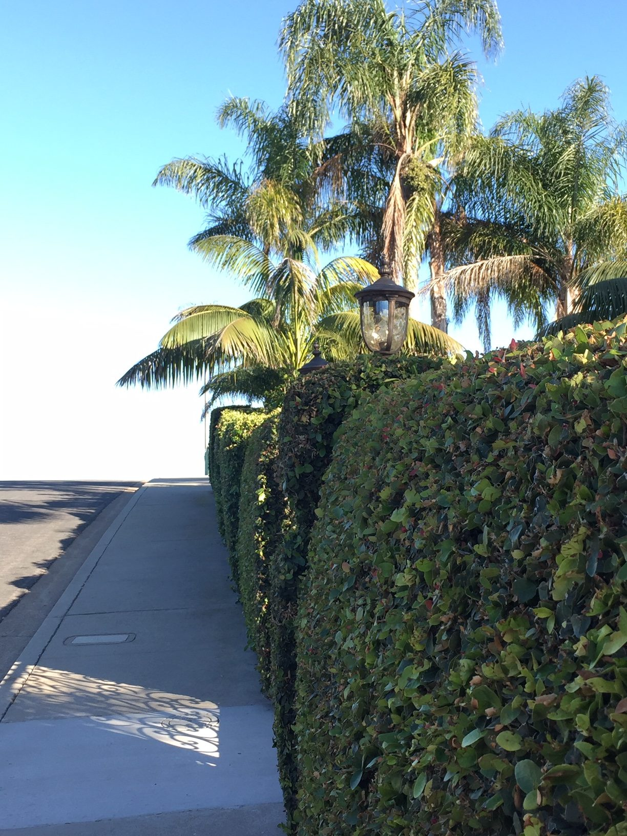 Residential Brush and land clearing san diego