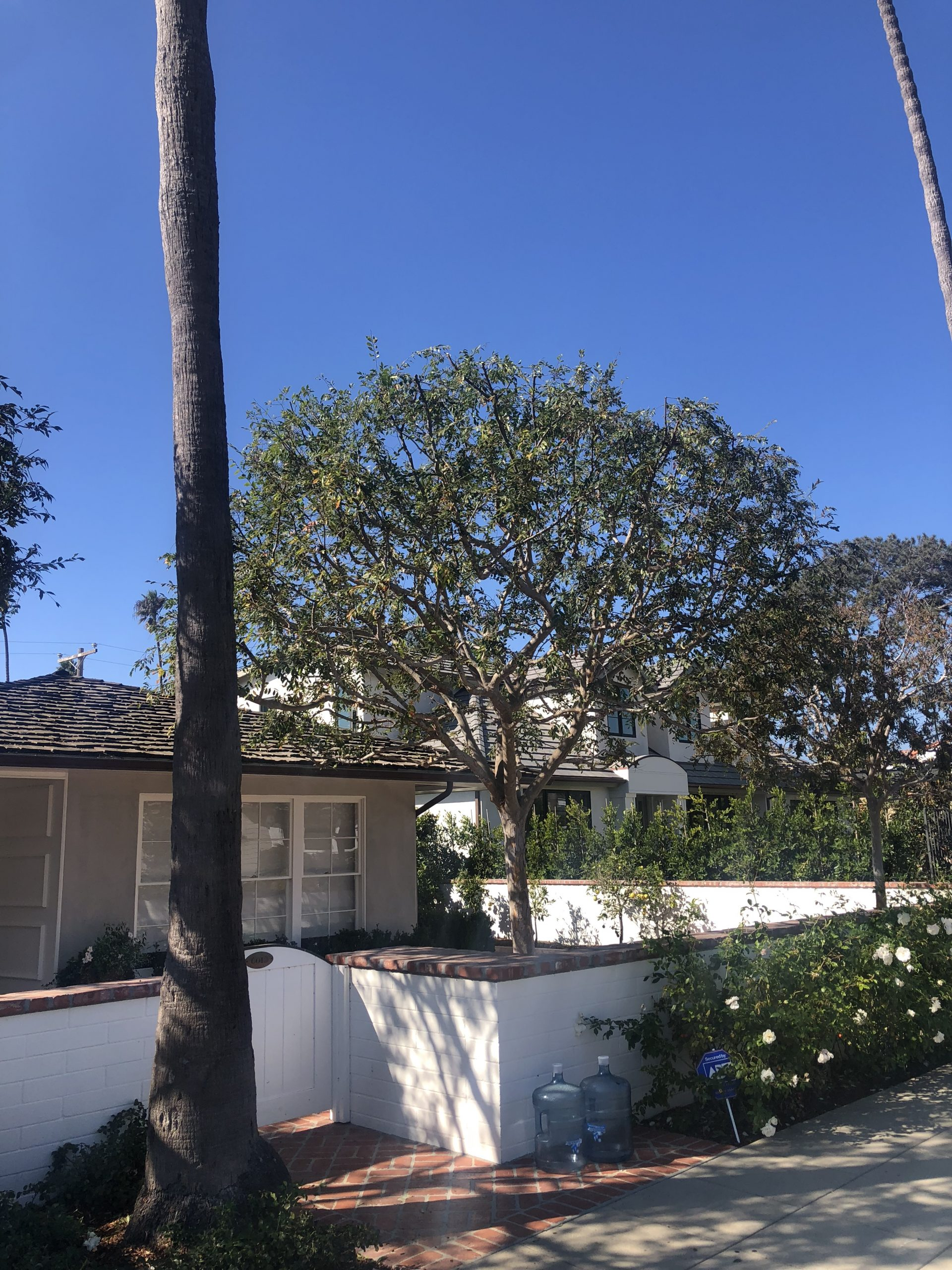 Tree Care San Diego